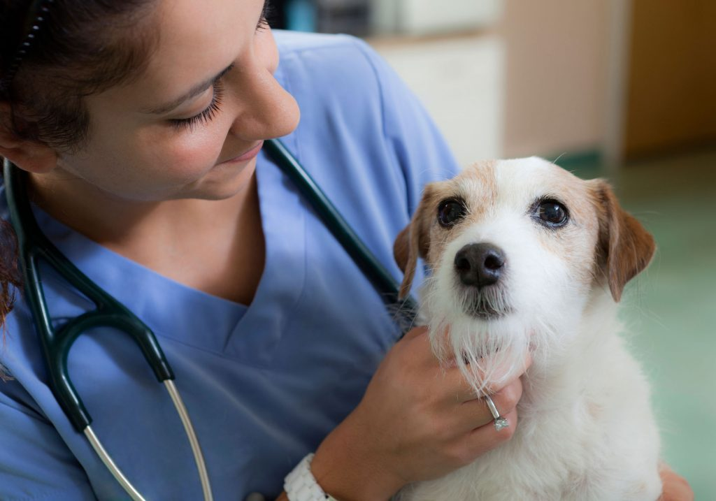 Fur Babies: How to travel with your pet on your next nursing assignment